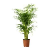 Déménager ses plantes vertes